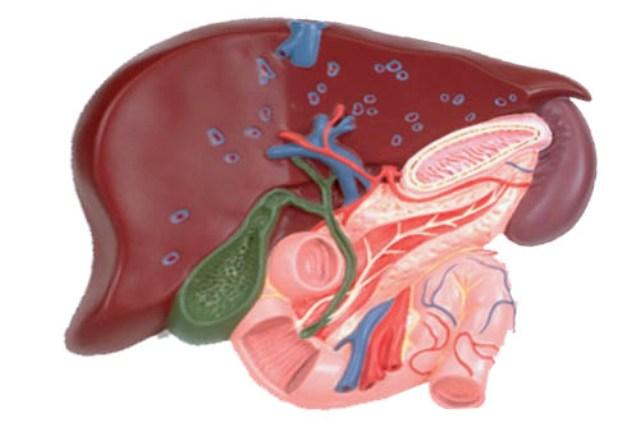 Диета при хроническом и остром холецистите